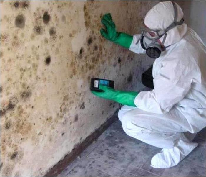 Mold Remediation Conditions In South Hills Might Be Right For Mold