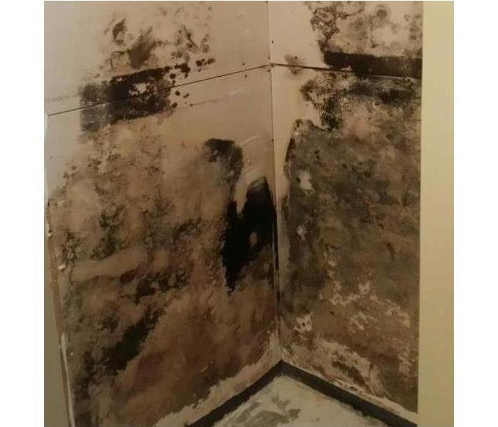 Causes Of Mold In Homes